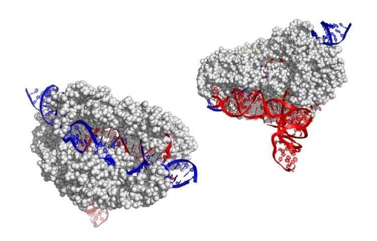 CRISPR CASX