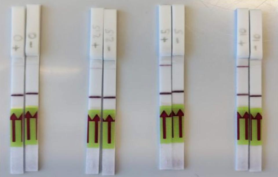 CRISPR Coronavirus rapid paper test