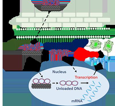 carbon nanotube illustration