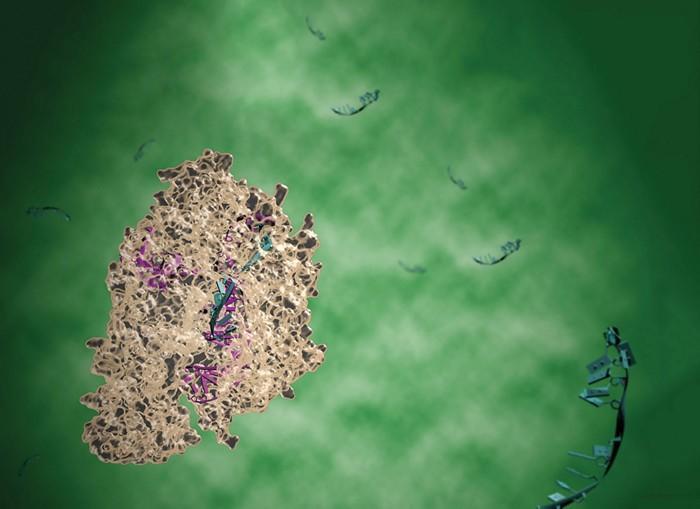 CRISPR/Cas12a system. Photo courtesy C&EN, Illusciences.