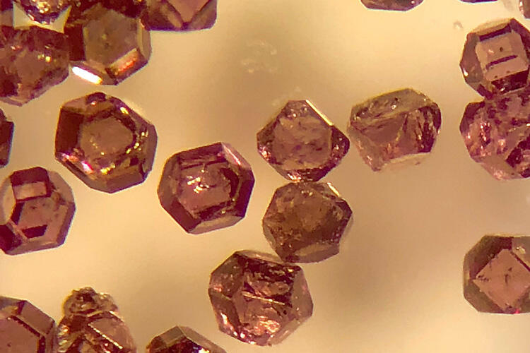 The microdiamonds used as biological tracers are about 200 microns across, less than one-hundredth of an inch.