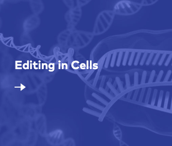 Editing in Cells