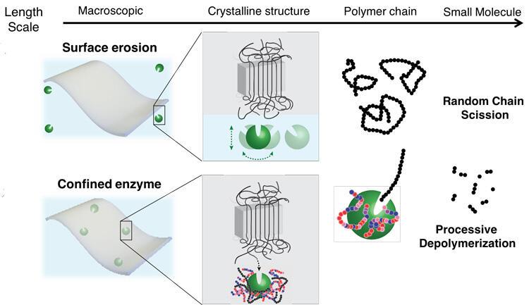 Enzyme schematic