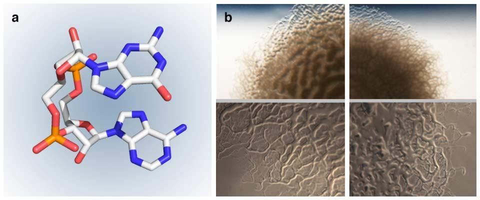 Bacteria research diagrams