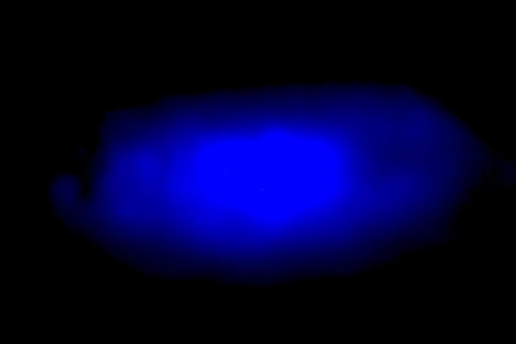Halide perovskite crystal that emits blue light. Courtesy Peidong Yang.