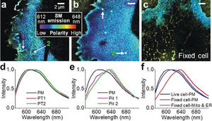 Nanoscopic mapping of lipid order in cell membranes with NR4A.