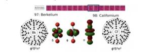Berkelium and Californium