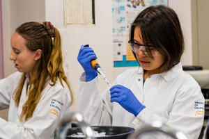 A student pipetting in the summer course on CRISPR-Cas9 gene-editing. (Kevin Doxzen photo)
