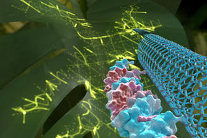 genetic engineering in plants just got easier and safer