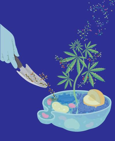 Feeding yeast to grow cannabinoids