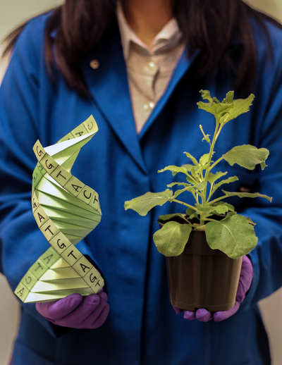 Scientist holds DNA and plant